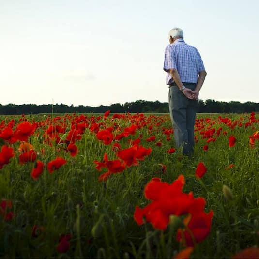 An older man stands facing away from the camera in a field of poppies