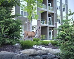 Deer, The Heartland Retirement Residence, Okotoks